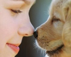 Животные как средство профилактического лечения