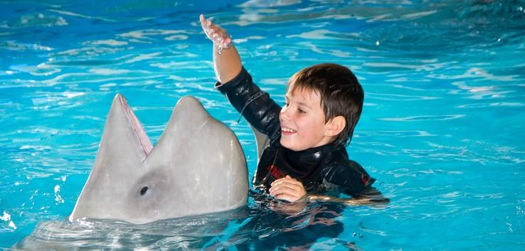 delfini - Животные лечат людей