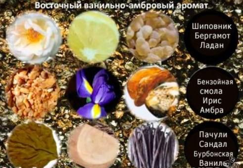 Amber Elixir Night состав - Парфюмерная вода Amber Elixir Night: отзывы