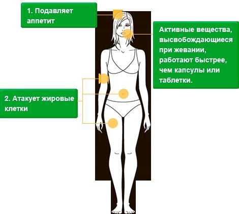 bodyfit - Жевательная резинка для похудения - отзывы только от реальных людей