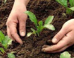 Как ухаживать за руками после садовых работ?