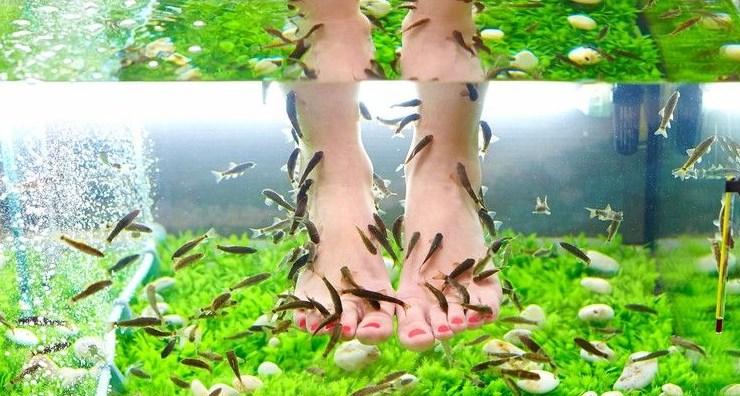 Ribi Piling Nog - Пилинг для ног - варианты пилинга