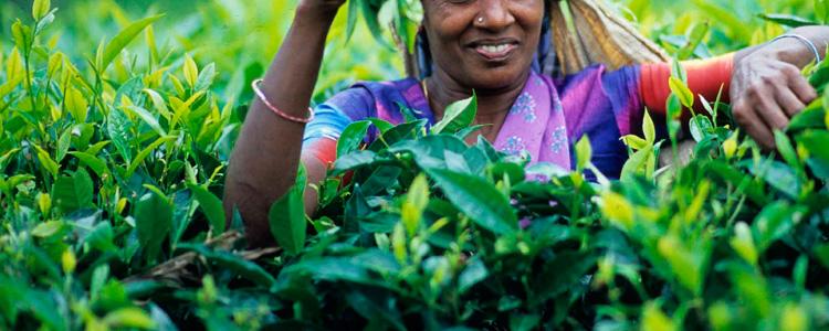 Сколько стоят свежие соки (фреши) на Шри-Ланке